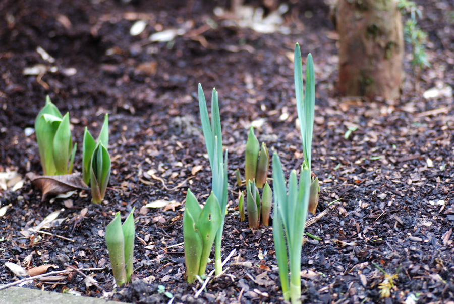 February in my garden
