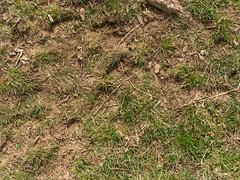 Grass_green-dirtpatches-sticks_medium-2.jpg