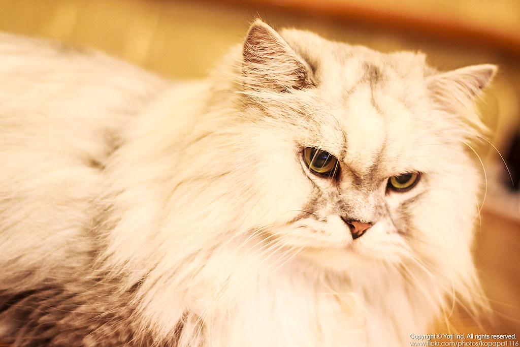 元氣貓主題餐廳 IMG_6020