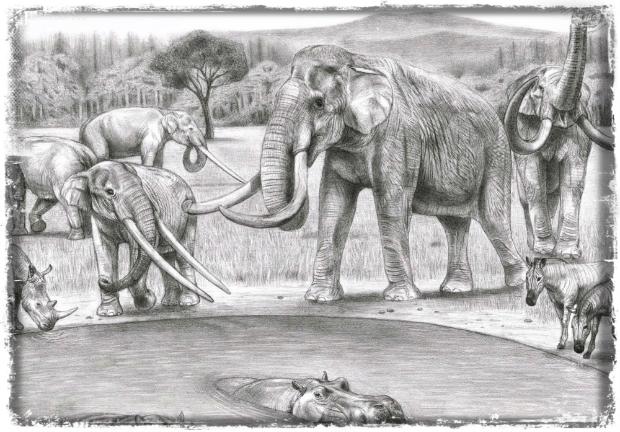 elephants-cryptozoology