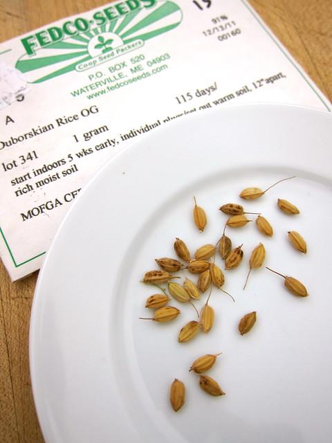 3.31.14 Duborskian Upland Rice