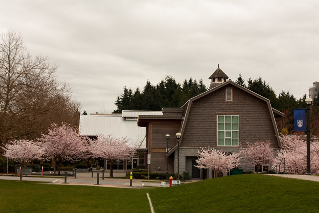 Cherry Blossoms at Old Barn Community Centre UBC