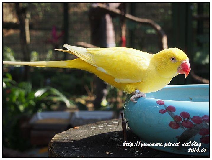 森林鳥花園1