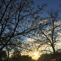 11 March 2017 #sunset #samespotforayear #nofilter #vso #vsocam #sunsetporn #cloudporn