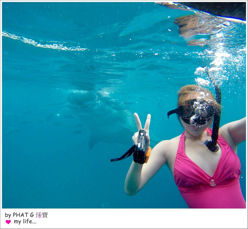 cebu whale shark 22-2