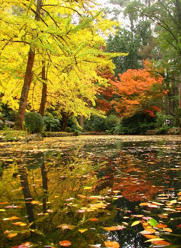 autumn trees lake color colour reflection leaves reflections garden pond landscaping australia sherbrooke maidenhairtree ginkgobiloba olinda burnhambeeches dandenongranges aspro thedandenongs alfrednicholasgardens alfrednicholasmemorialgardens phunnyfotos