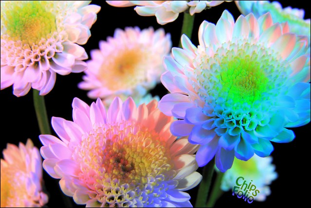 Flowers From A Walmart Bouquet Flickr Photo Sharing