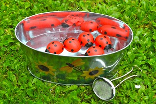 Ladybugs Rescue from Water