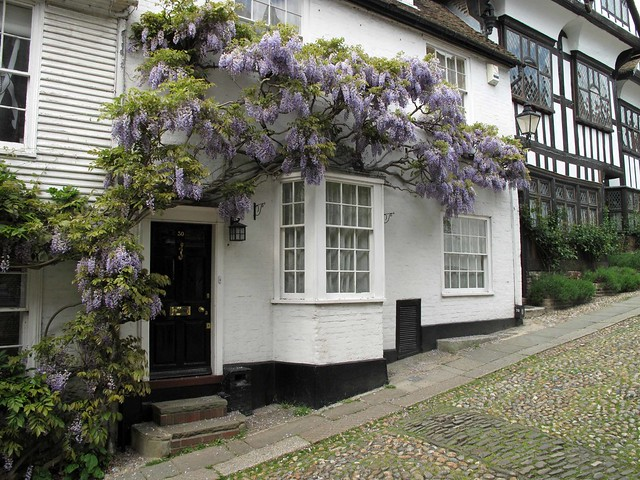 Wisteria in Mermaid Street