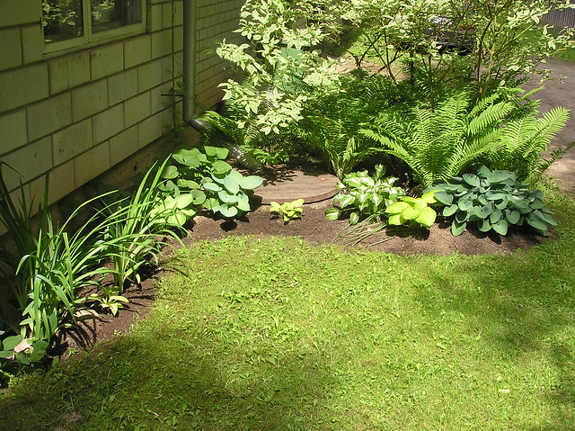 My little hosta corner