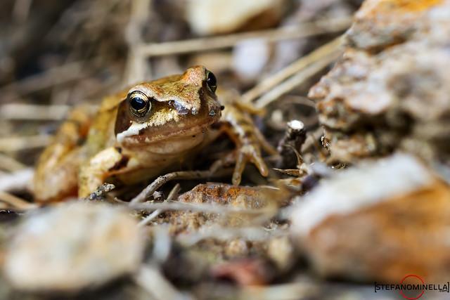 Little Frog Look