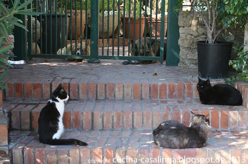 Siracusa Katzen Hunde