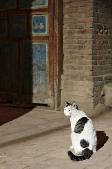 A cat in flont of a local house, Shanshan (Piqan) County ルクチュン、ドアの前に佇むネコ