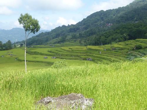 Sulawesi13-Lo'ko Mata-Ke'pa (10)
