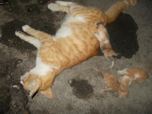 台湾动物紧急救援小组 台湾伤残动物救援 流浪动物送养 动物保护意识