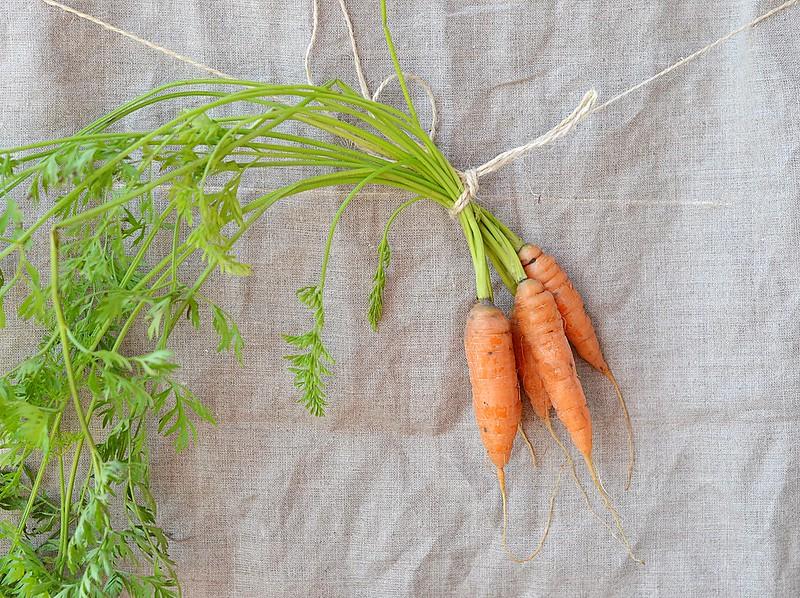 carrot.15
