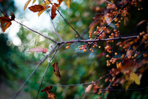 Branch by Flickr User: usmanaakhan