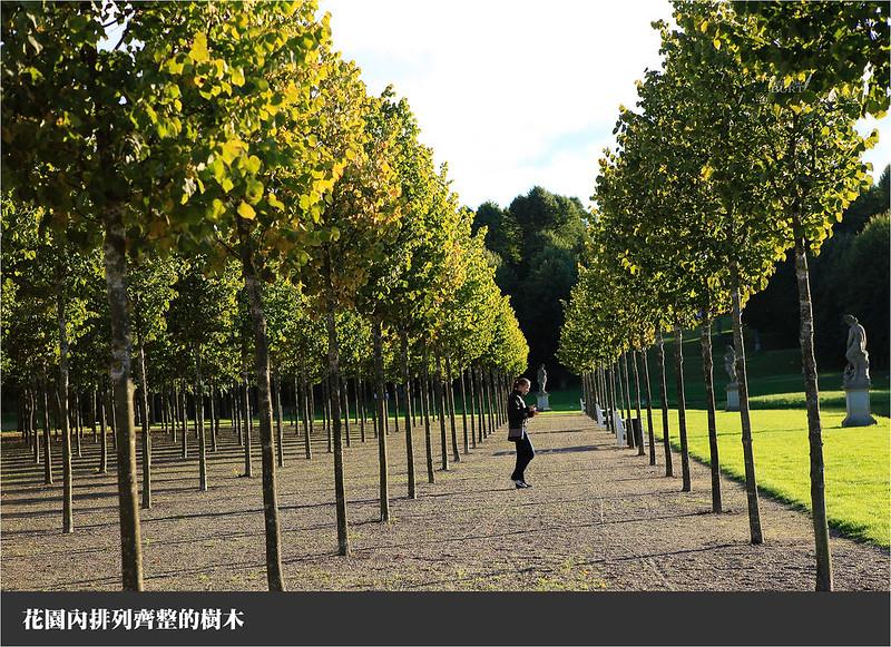 花園內排列齊整的樹木