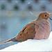 Snow Bird by Jeannot7