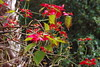 Poinsettia Tree by b16dyr