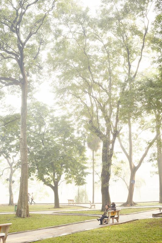 Hanoi trees.