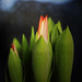 tulips make me happy...in late evening light ♥♥♥ by Gregoria Gregoriou Crowe