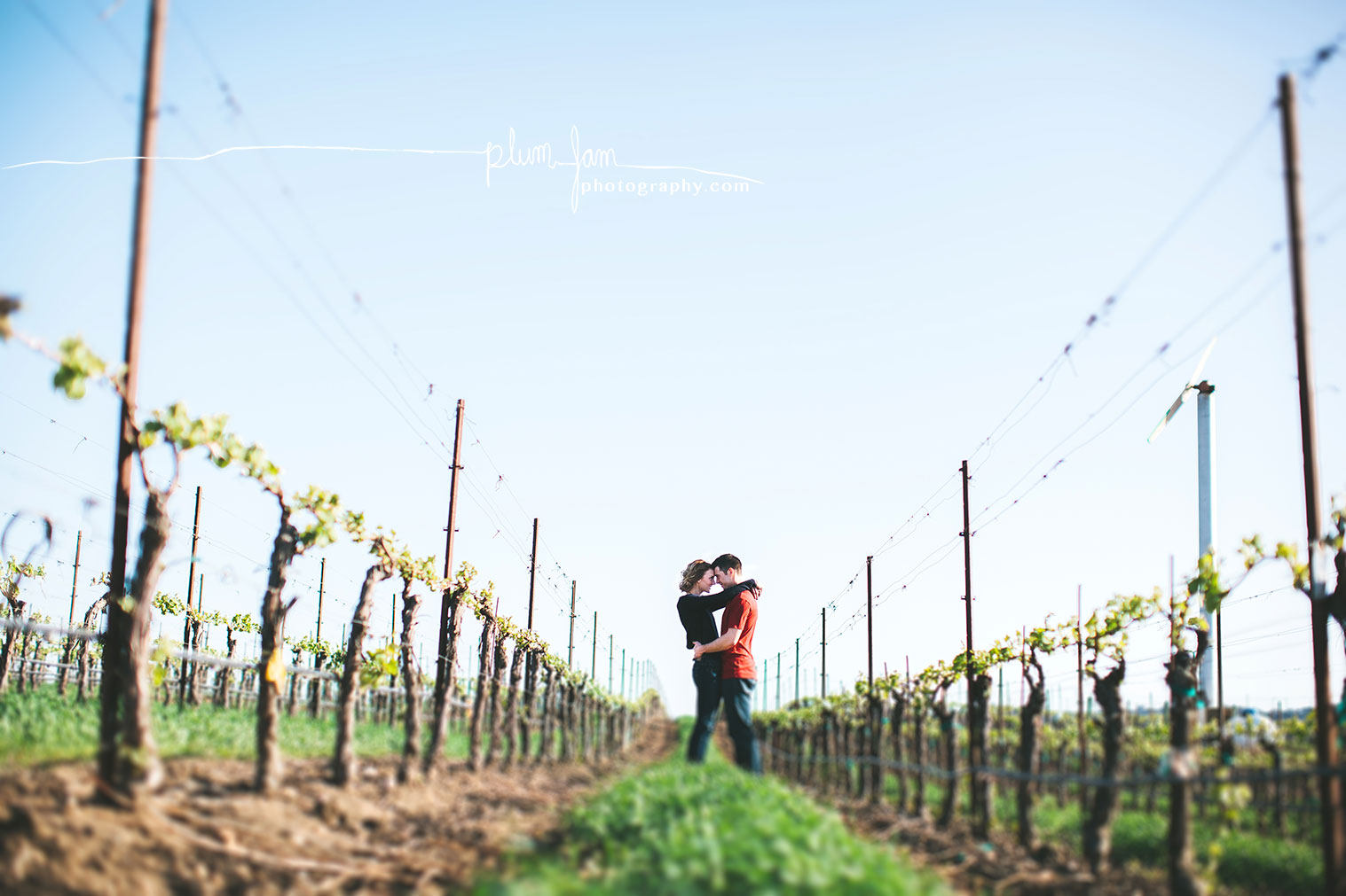 RebeccaMike-Engagement-vineyard-shellbeach-california-plumjamphotography-02