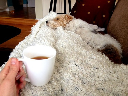 April 1 #dailylunches - a sick day requires tea