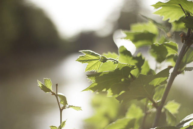 Primavera en el Canal
