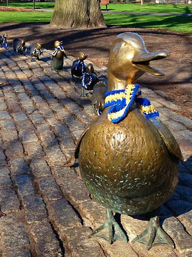 Mallard family with marathon scarves