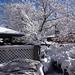 Snow trees!