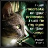 "Most effective type of meditation - on the ways and words of God.   ""I will meditate on Your precepts.  I will fix my eyes on Your ways."" Psalm 119:15. #meditation #meditate #godsword #godsway #cats"