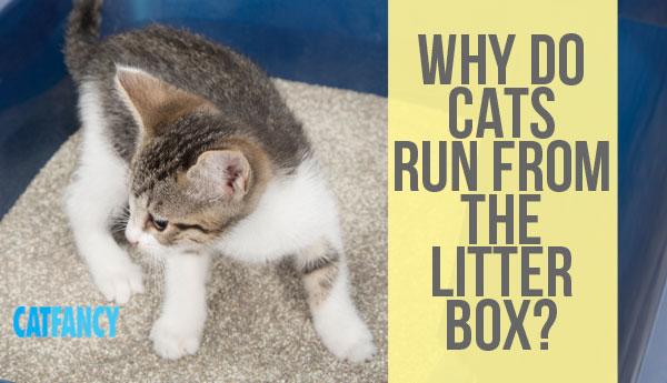 cats-run-from-litterbox
