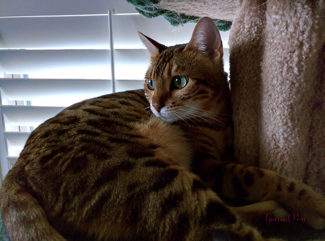 Whiskers & Paws July 2016 Edition (8)