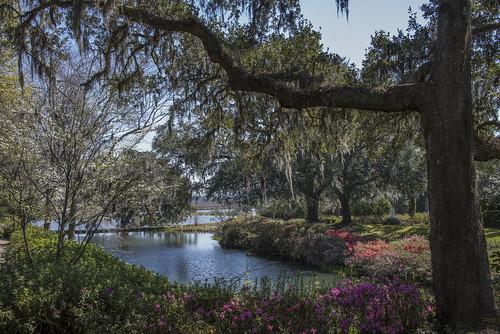 middleton place plantation spring 2017 charleston sc historic