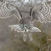 Great Grey Owl hunting! by ChristinaAnne.M