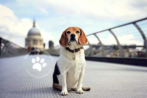Maggie | Pet Photography London