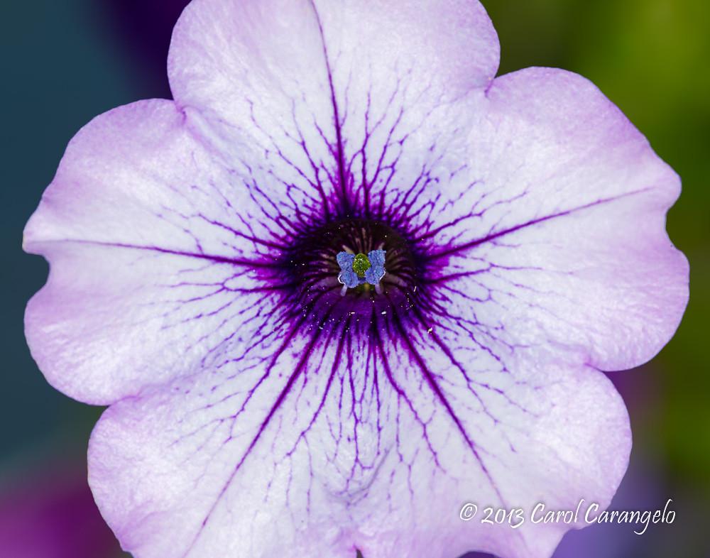 IMAGE: http://farm4.staticflickr.com/3815/8943809846_131525f007_b.jpg