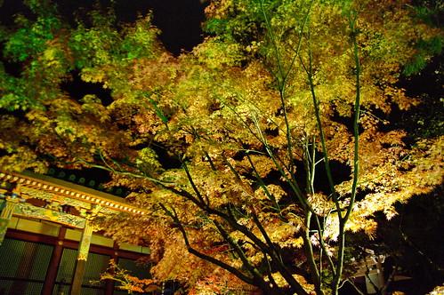 【写真】2012 紅葉 : 永観堂/2020-05-30/IMGP6258