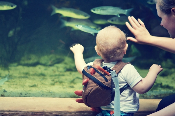 Finding Nemo at Blue Reef Aquarium - Newquay