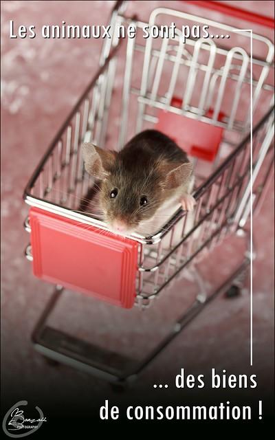 Affiches contre l'abandon et pour le respect de l'animal... 9596281211_6c78a0acd0_z