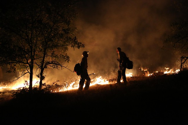 firemen in front of a forest fire