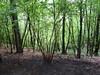木のゆりかご ベルツの森