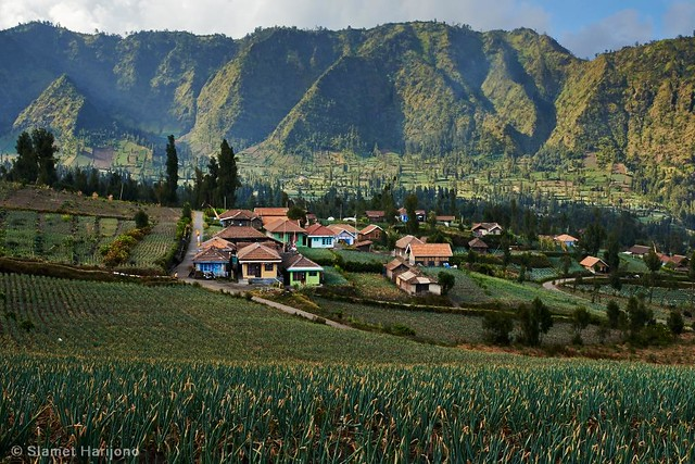 Cemoro Lawang, Mount Bromo #36, East Java