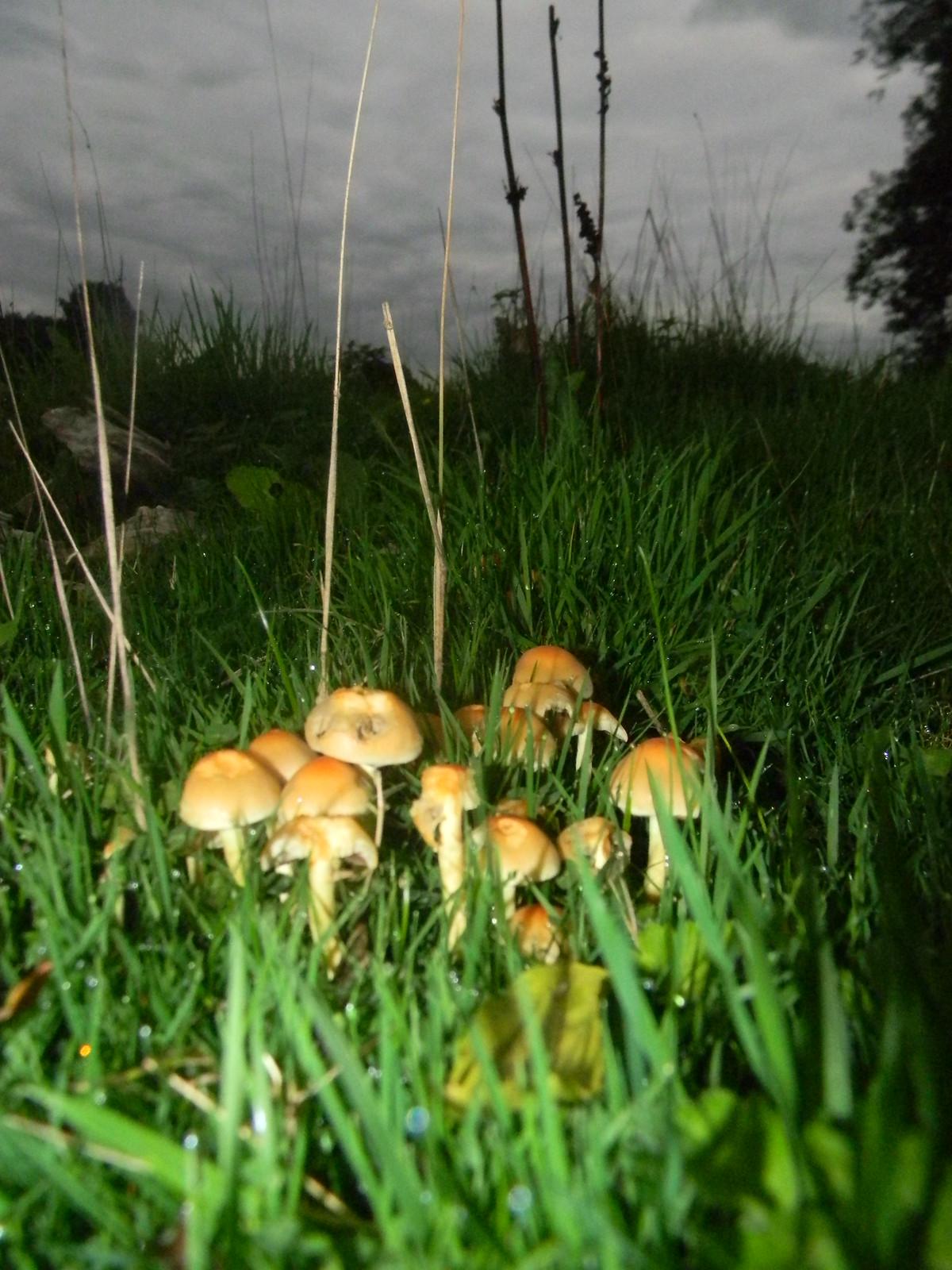 Flashlit fungi Hever to Ashurst