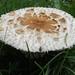 2013-10-22 Mushroom (02) (1024x680) by -jon