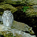 Little Owl by Judi.M