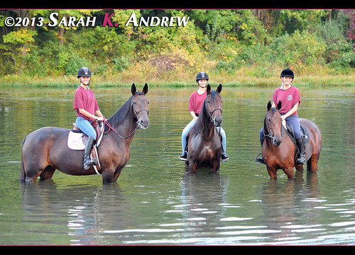 Horse Rescue United volunteers and adoptable Standardbreds go for a trail ride in Assunpink Wildlife Management Area