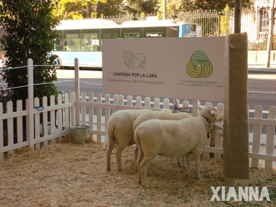 Campaña por la lana 2013, Madrid