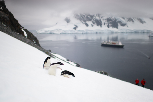 RYALE_Proposal_Antarctica-3